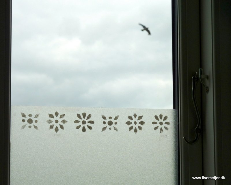 Window and bird