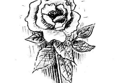 rose-blyant-kraftig